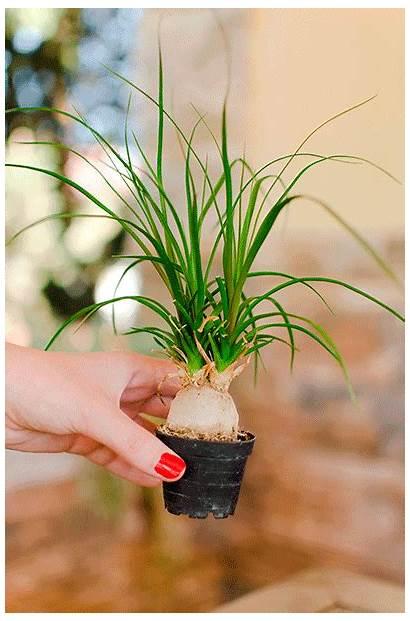 Plant Repot Garden Easy