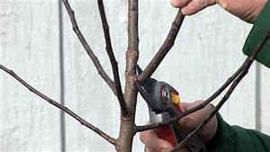 Apfelbaum Schneiden Wann : schnittanleitung junge kernobstb ume schneiden winterschnitt youtube ~ Watch28wear.com Haus und Dekorationen