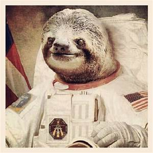 Astronaut Sloth - Pics about space