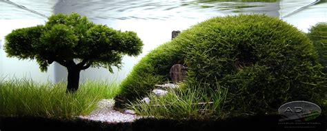 Aquascape World by Miniature Tree Look Aquascaping World Forum