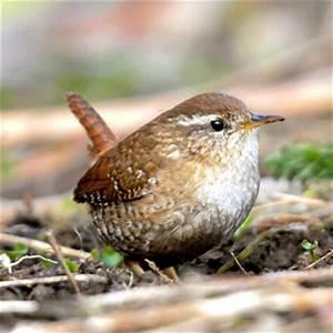 Kleine Vögel Im Garten : vogelfreundlicher garten vogel und naturschutzprodukte ~ Lizthompson.info Haus und Dekorationen