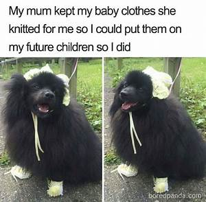 Funny Pets Over Kids Memes Funnies Funny Kid Memes