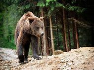 Woodland Habitat Animals
