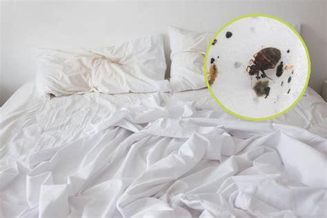 Loswerden Bett by So Erkennt Ob Im Hotelzimmer Bettwanzen Lauern