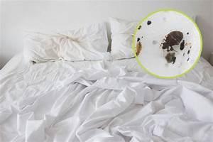 Was Tun Bei Bettwanzen : so erkennt man ob im hotelzimmer bettwanzen lauern travelbook ~ Eleganceandgraceweddings.com Haus und Dekorationen