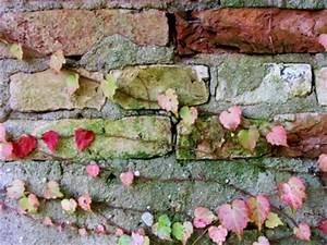 Grüner Schimmel Wand : gr ner schimmel gr ne flecken bedeuten nichts gutes ~ Whattoseeinmadrid.com Haus und Dekorationen