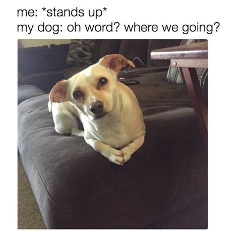 Hilarious And Wonderful Animal Memes That Will Crack You