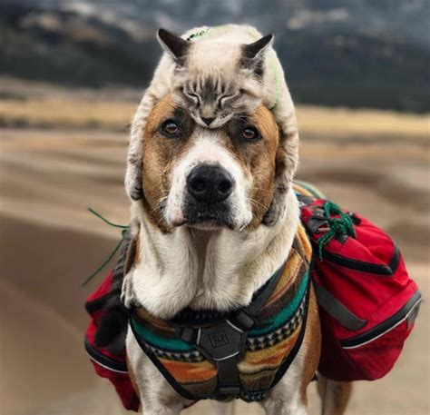 Cat And Dog Cat And Dog Love Travelling Together And Their Photo Are