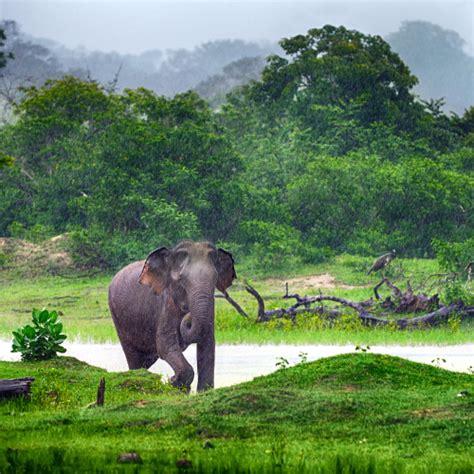 Le Lecture Nature Et Découverte by Circuit Nature Et D 233 Couverte Du Sri Lanka Voyage Au Sri