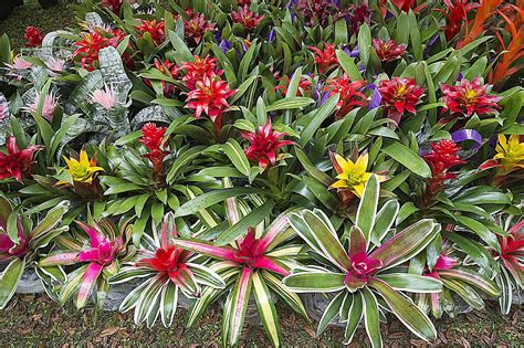 tropical colors for home interior how to propagate bromeliads at home