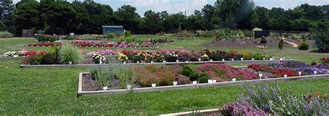 JC Raulston Arboretum Summer 2014 Color Trials Report