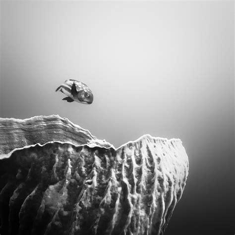 dark brooding underwater photography  youve
