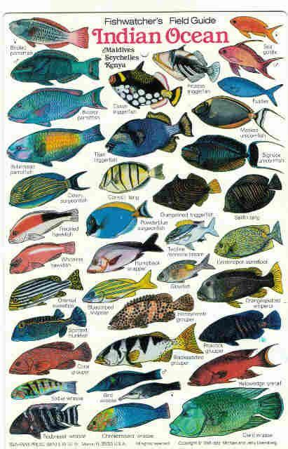 seychelles reef fish google zoeken animais pinterest
