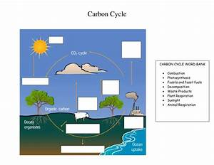 Carbon Cycle And Green House Effect Activities By Tomllewellyn - Teaching Resources