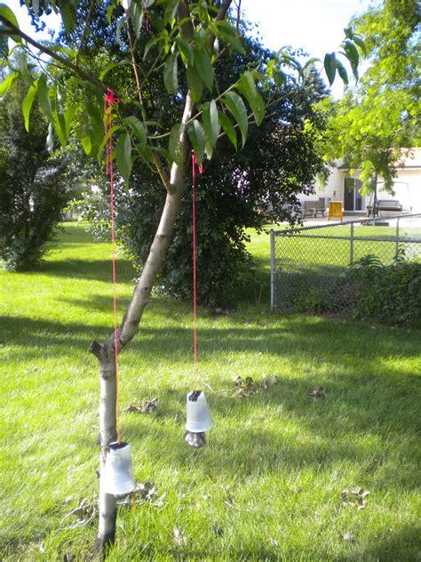 gardening keep squirrels away with moth balls yup
