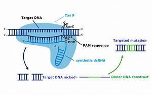 Schematic Representation Of Cas9 Protein