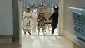Gif animé comique d'une bande de chats voyous