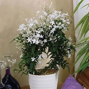 5 plantes dinterieur pour decorer la chambre a coucher et With plante verte dans une chambre a coucher