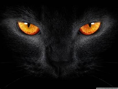 Cool Cat Wallpapers Cats Pattern Backgrounds Background
