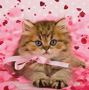 Pussy Cat 3D Holographic Valentine's Day Card Square ...