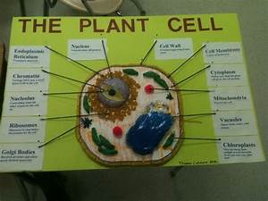 Plant Cell Model Project Materials