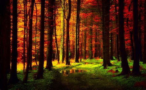 autumn forest wallpaper  desktop pixelstalknet