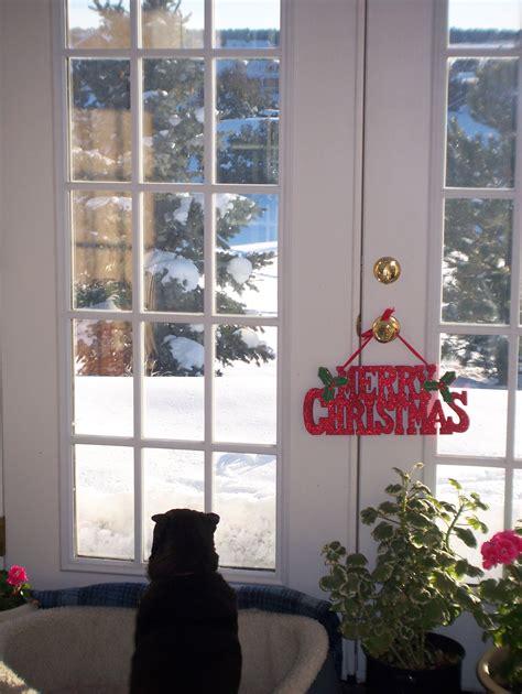 furbabies playing   snow     window