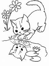 Coloring Pages Cats Animals Printable Cat sketch template