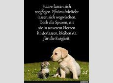 66 besten Sprüche für Tierfreunde Bilder auf Pinterest