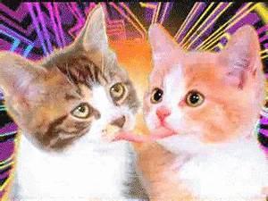Embrasser Un Séropositif Avec La Langue : les chats mignons qui d cide de s 39 embrasser avec la langue ~ Medecine-chirurgie-esthetiques.com Avis de Voitures