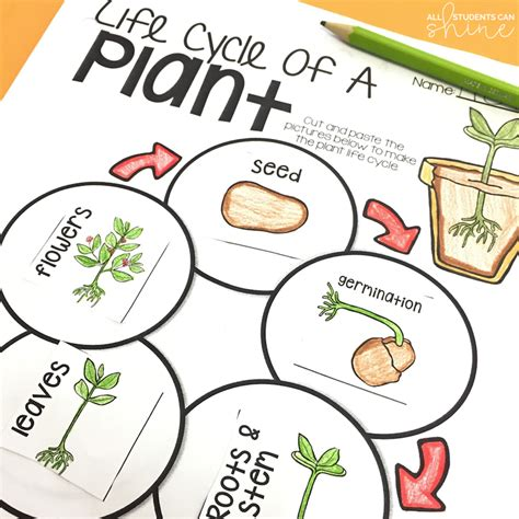 Plant Ideas & Activities  All Students Can Shine
