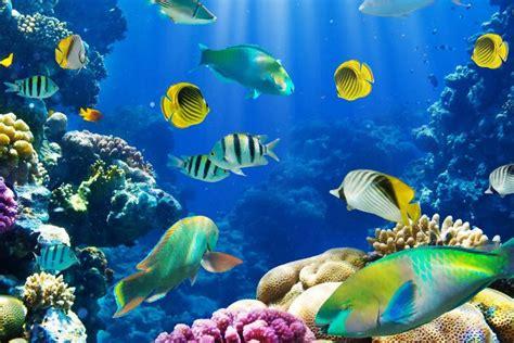 tropical fish wallpaper wallpapertag