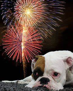 Dog Scared of Fireworks Night? Tips for a Peaceful Bonfire ...