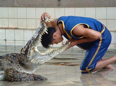 dicount ticket  thailand crocodile farm