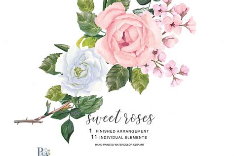 watercolor blush pink  white roses clipart separate