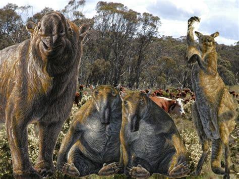 mega fauna australian megafauna snowy cattle sized