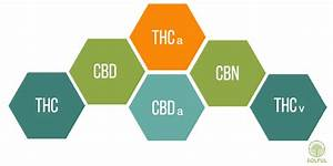 What Are Cannabinoids And How Do They Help Your Body