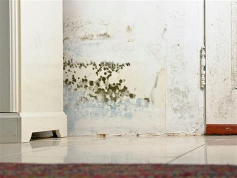 black mold     hgtv