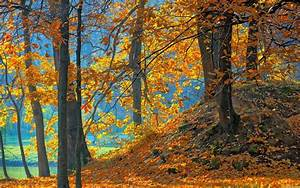 Blue landscapes nature trees autumn wood orange leaves ...