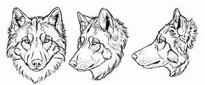 How to Draw a Wolf: Head and Shoulders, Knees and Paws