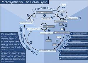 Ib Biology  Photosynthesis And Cellular Respiration