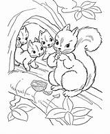 Coloring Squirrel Pages Colouring Preschool Adult Children Tree Popular Clip Library Clipart Discover sketch template