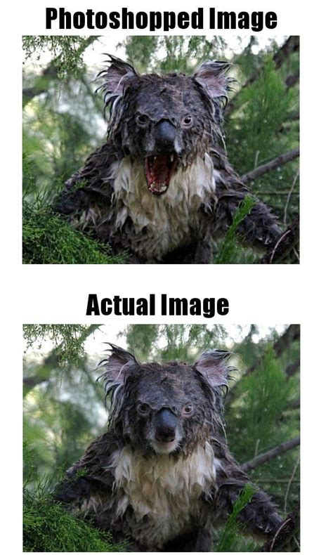images  hoax dont