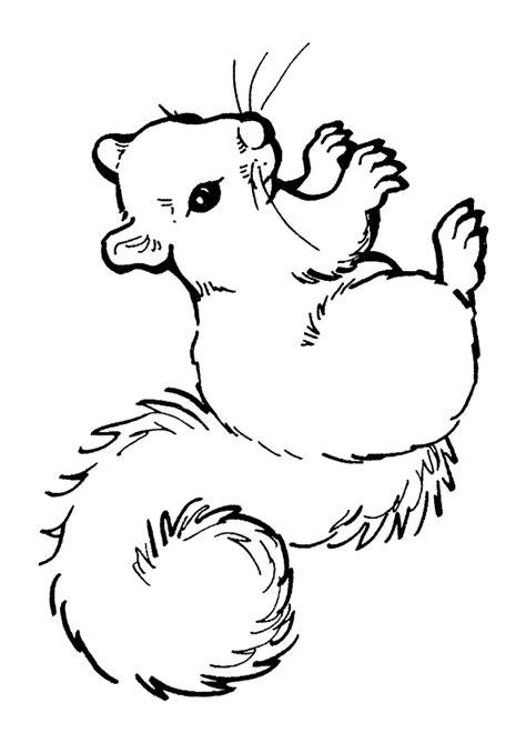 Coloriage ecureuil sur Hugolescargot com
