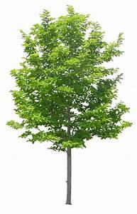 17 Best ideas about Tree Psd on Pinterest