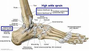 Ankle And Foot Joints At Kansas City University Of