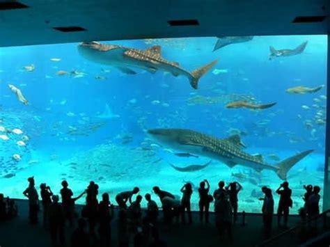 things largest aquarium in world