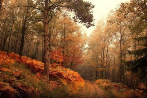 Autumn Tree Leaf Fall Animated Wallpaper - autumn landscape wallpaper 183