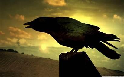 Raven 4k Desktop Bird Eagle Ultra Wallpapers