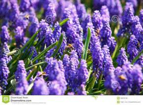 lavender bouquet bees on flowers stock photo image 39850138